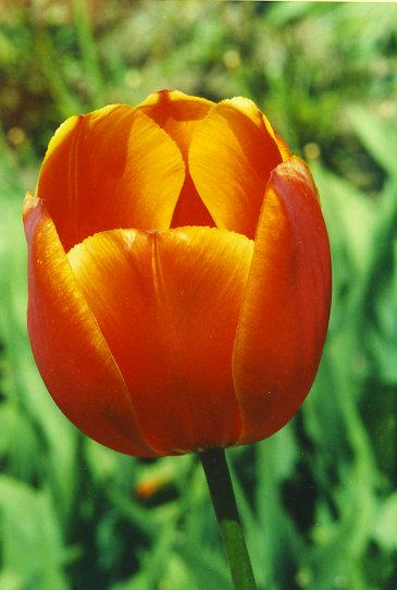 Садовые цветы фотография из галереи